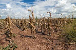 Slowing the rate of climate change